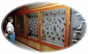 Moses Memorial Bird Collection-Grand Manan Island