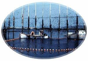 Fishing Weir-Grand Manan Island