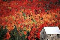 Fall scenery, near Bristol