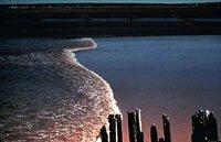 Tidal Bore Moncton