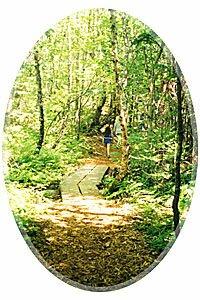 beautiul forest pathways- Irving Nature Park, Saint John, New Brunswick