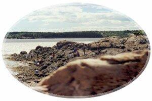 Tidal Pool Exploration at the Irving Nature Park, Saint John, New Brunswick