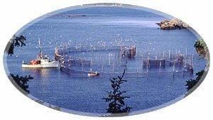 Fishing Weir-St.George, New Brunswick